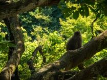 Monkey spotting on the hike up.
