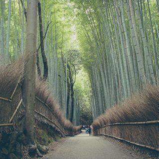 Bamboo Grove, Kyoto