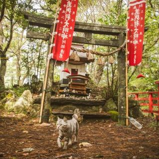 Tashirojima, Cat Island, Japan
